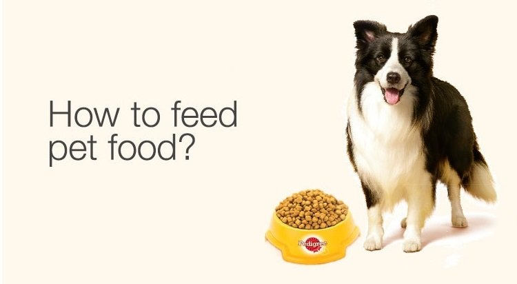 How to feed pet food?
