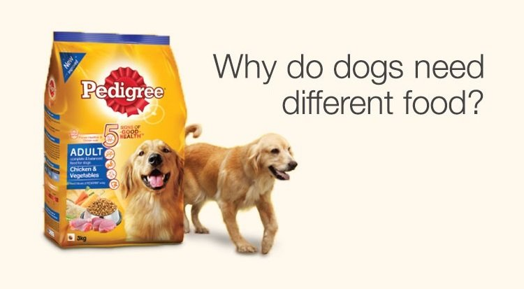 Why do dogs need different food?