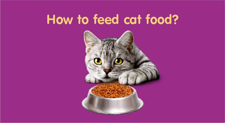 How to feed cat food?