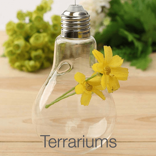 Terrariums Lawn&Garden