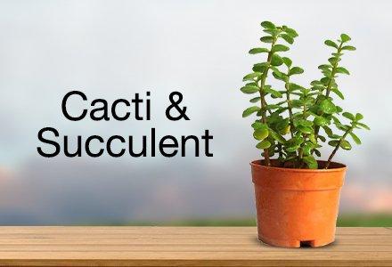 outdoor plants buy outdoor plants online at best prices