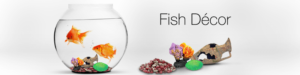 Buy aquarium fish online india and more empire state for Order fish online