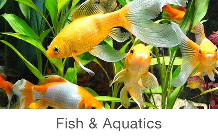 Pet supplies buy pet supplies online at best prices in for Where to buy pet fish