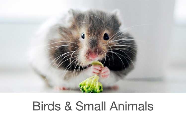 Bird & Small Animal Supplies