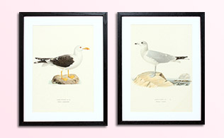 Vintage Herbatorium & Bird Prints!