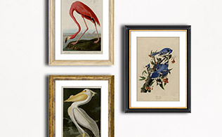 MyHabit Masters: John James Audubon!