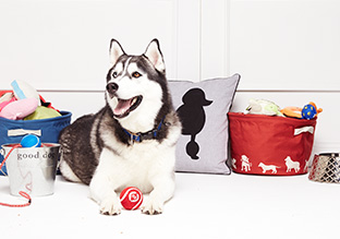 Pet Perfect: Beds, Carriers & More