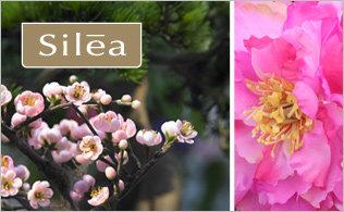 Silea Flores