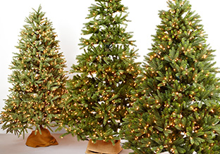 Deck the Halls: Christmas Trees!