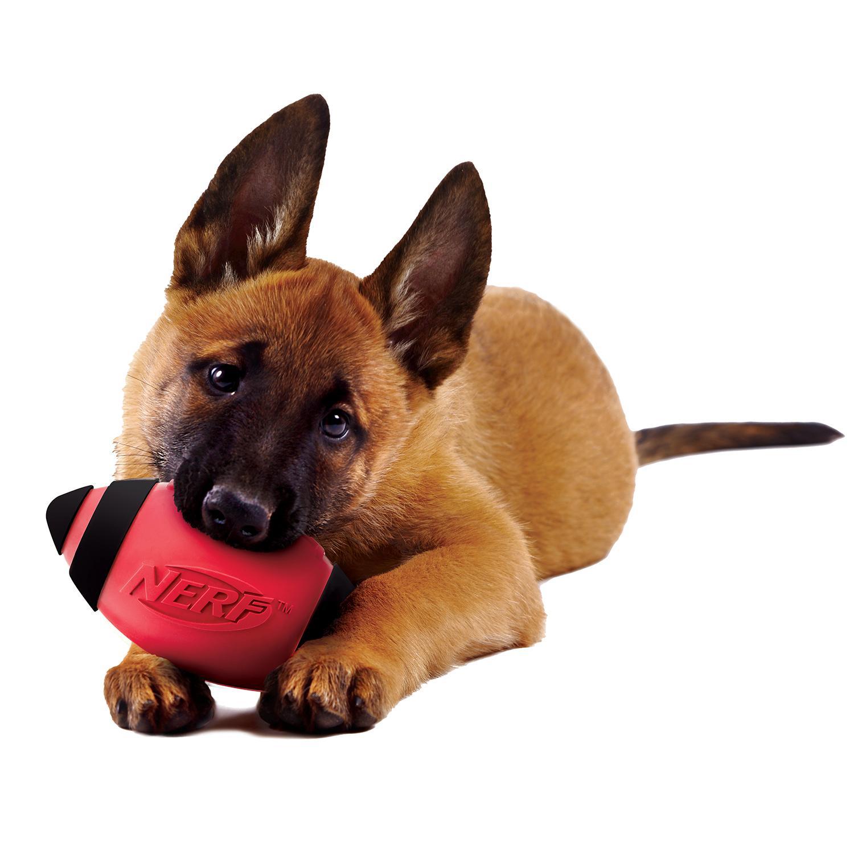 Amazon.com : Nerf Dog Squeak Rubber Football Dog Toy