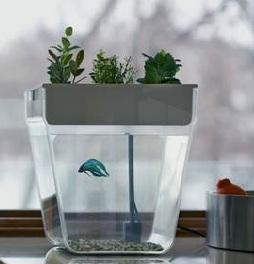 Fish tank aquarium new aqua farm v2 self cleaning grows for How to clean an old fish tank